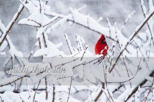1-22-16 Cardinal-3 CSP