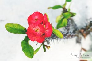 Beauty Amongst the Thorns